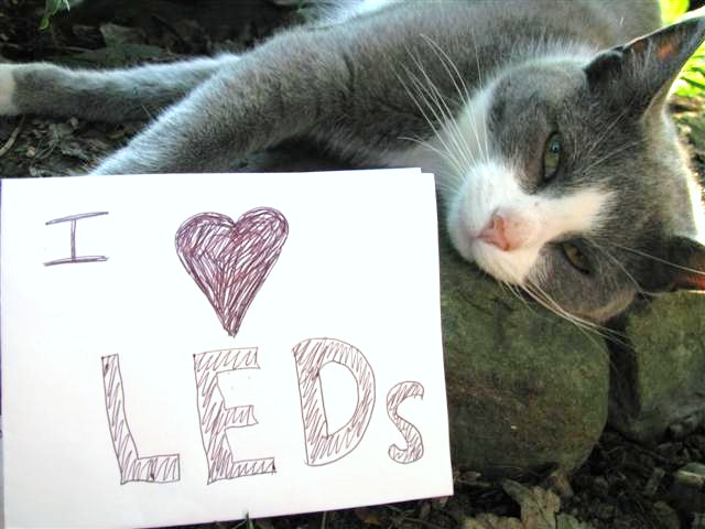 Cats love LEDs too!